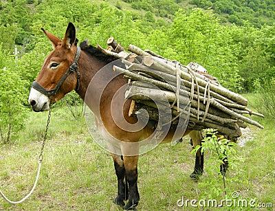 Donkey With Load Royalty Free Stock Photo Image 10739325
