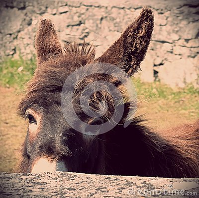 Donkey looking over stone wall