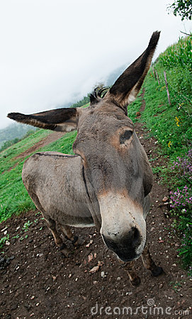 Donkey in meadow