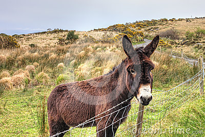 The donkey in the meadow in Ireland.