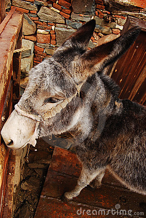 Donkey in the mountain village of Cyprus