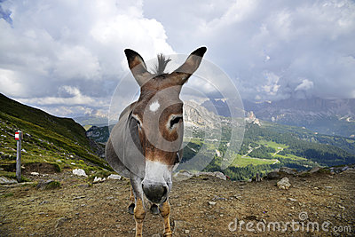 Donkey and mountains