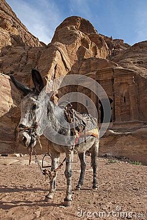 Donkey near ancient tomb in Petra