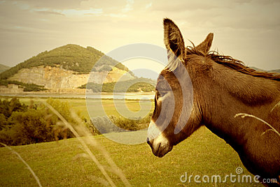 Donkey and quarry, nature reserve Santo�a