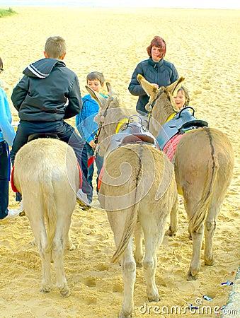 Donkey Rides.