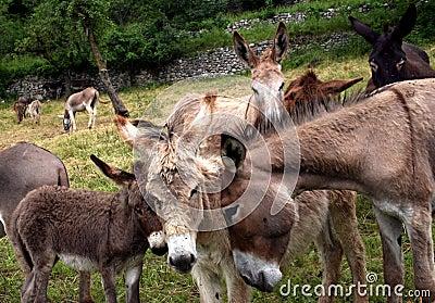 Donkey s