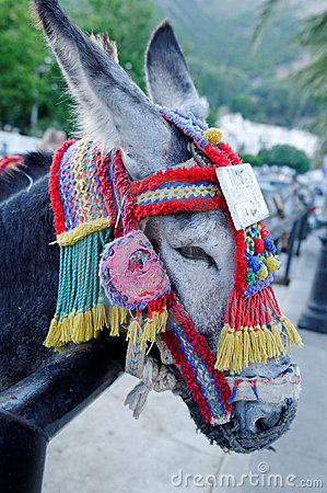 Donkey tourist attraction