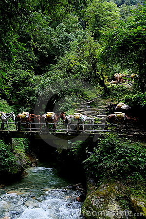 Free Donkey Train Crossing River And Waterfalls Stock Photography - 6742202