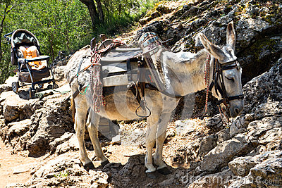 Donkey transportation in Cretan mountains