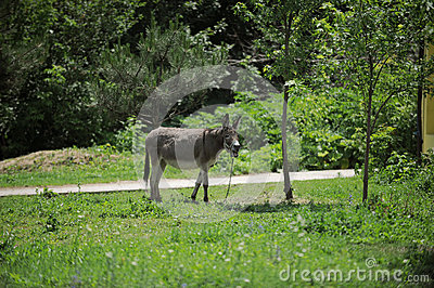 Donkey in Yard