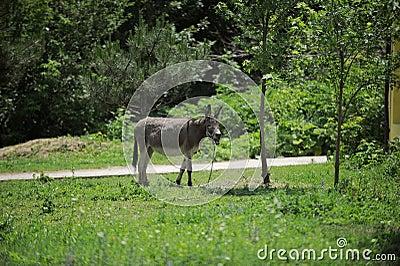Donkey in Yard
