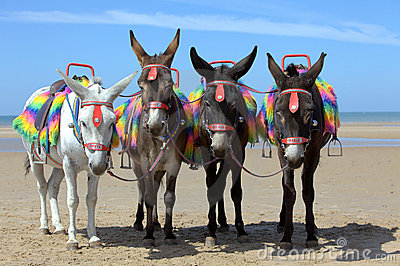 Donkeys at a beach resort