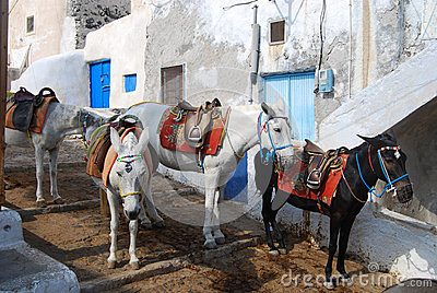 Donkeys waiting passengers at the port of Fira
