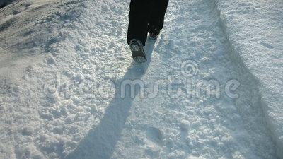 Donna che cammina in Forest Alone nel lotto di neve video d archivio
