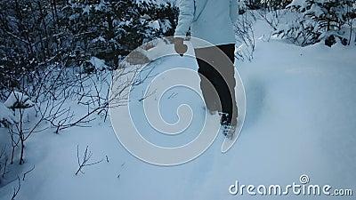 Donna che cammina in Forest Alone nel lotto di neve archivi video