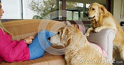 Donna con i suoi cani sul sofà a casa 4k archivi video