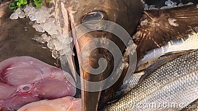 Dood zwaard vis op ijs stock videobeelden