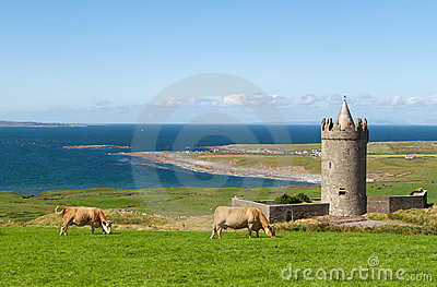 Doonagore castle with Irish cows in Doolin - Irela