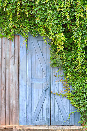 Door in garden and plant