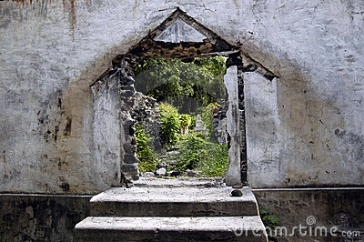 Door To The Rain Forest