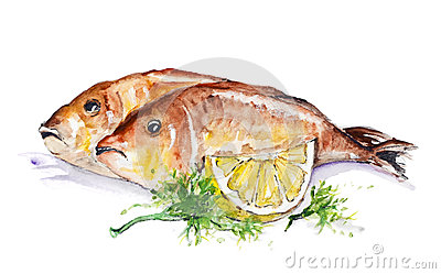 dorado fish stock image image 31518551