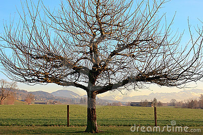 Dormant Winter Tree