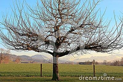Dormant Winter Tree