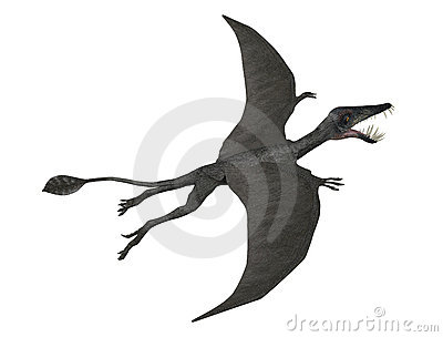 Dorygnathus in flight