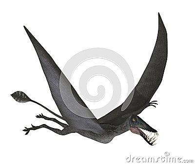 Dorygnathus Flying