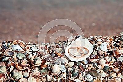 Dos anillos de bodas en shell