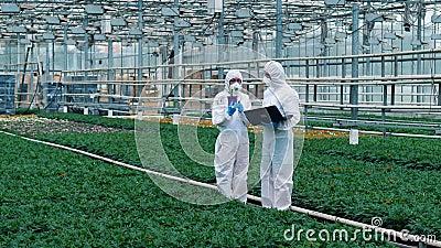 Dos biólogos revisan plantas en ollas científicos que trabajan en el cultivo de alimentos almacen de metraje de vídeo