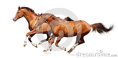 Dos caballos del alazán
