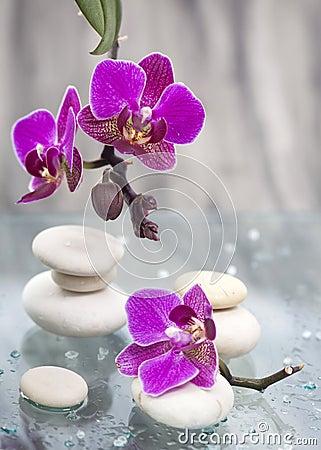 Resultado de imagem para pedra branca e flores