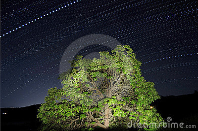 Dotted Star Trails