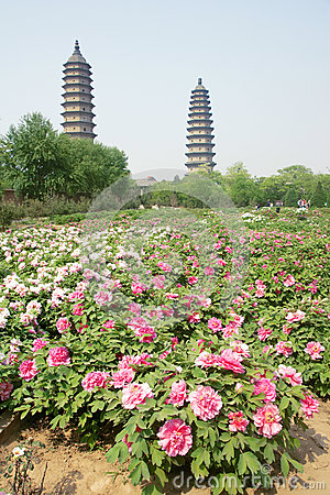 Double-pagoda Temple