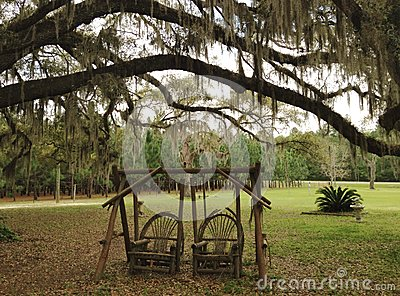 Recommend swinging under the oak tree