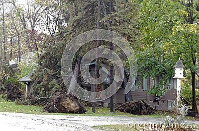 Double tree whammy from hurricane Sandy