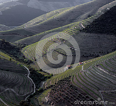 Free Douro Slopes Royalty Free Stock Photos - 42815068