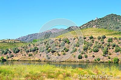 Douro Vineyards Hill