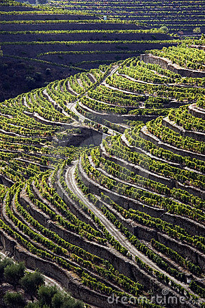 Douro1 Stock Photos - Image: 1693573