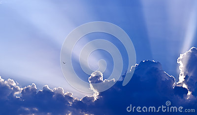 Dove against blue sky
