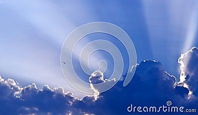 Dove against blue sky
