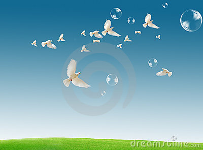 Dove in the air with wings wide open against a dra