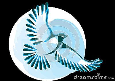 Dove or bird in flight
