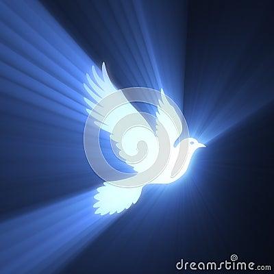 Dove bird peaceful light flare