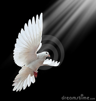 Free Dove In Flight Royalty Free Stock Photography - 17288077