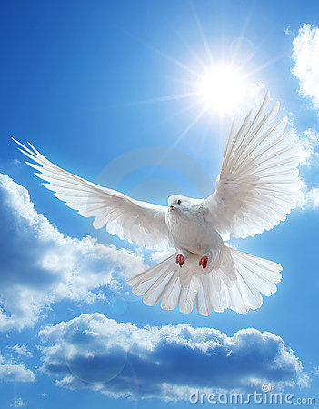 Free Dove In The Air With Wings Wide Open Stock Photos - 11704123