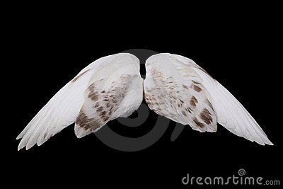 Dove's wings