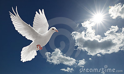 Dove In The Sky Stock Images - Image: 8848054