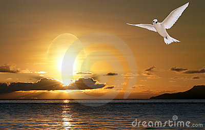Dove in sunrise, peace and happiness of Easter